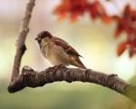 beautiful_bird-1280x1024